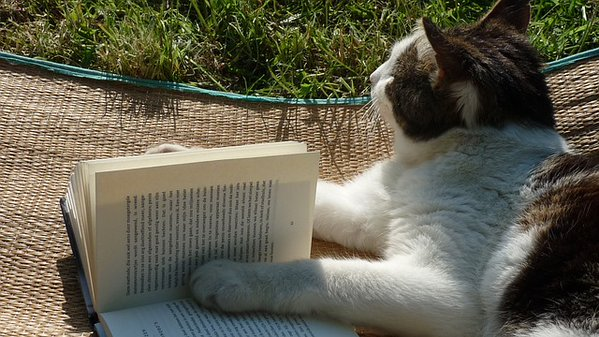 Pensive cat from Interesting Literature